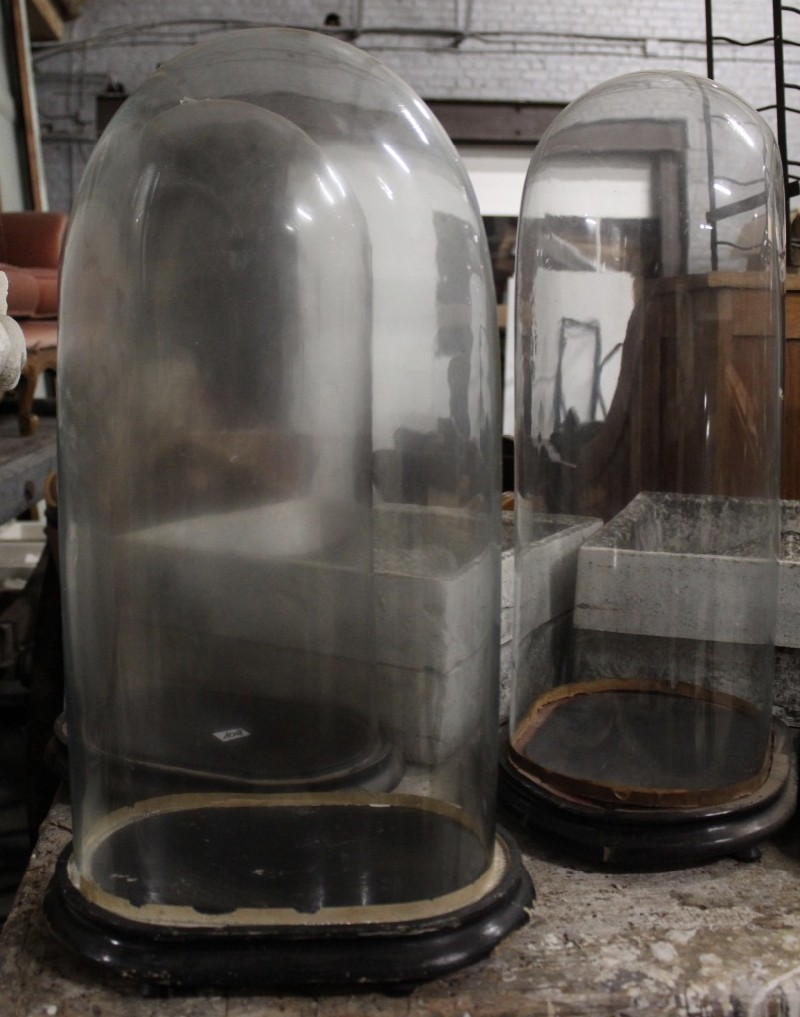 Collection of antique French tall glass domes on stands.